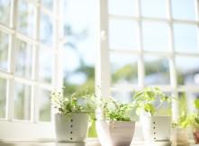 Springtime Open Window