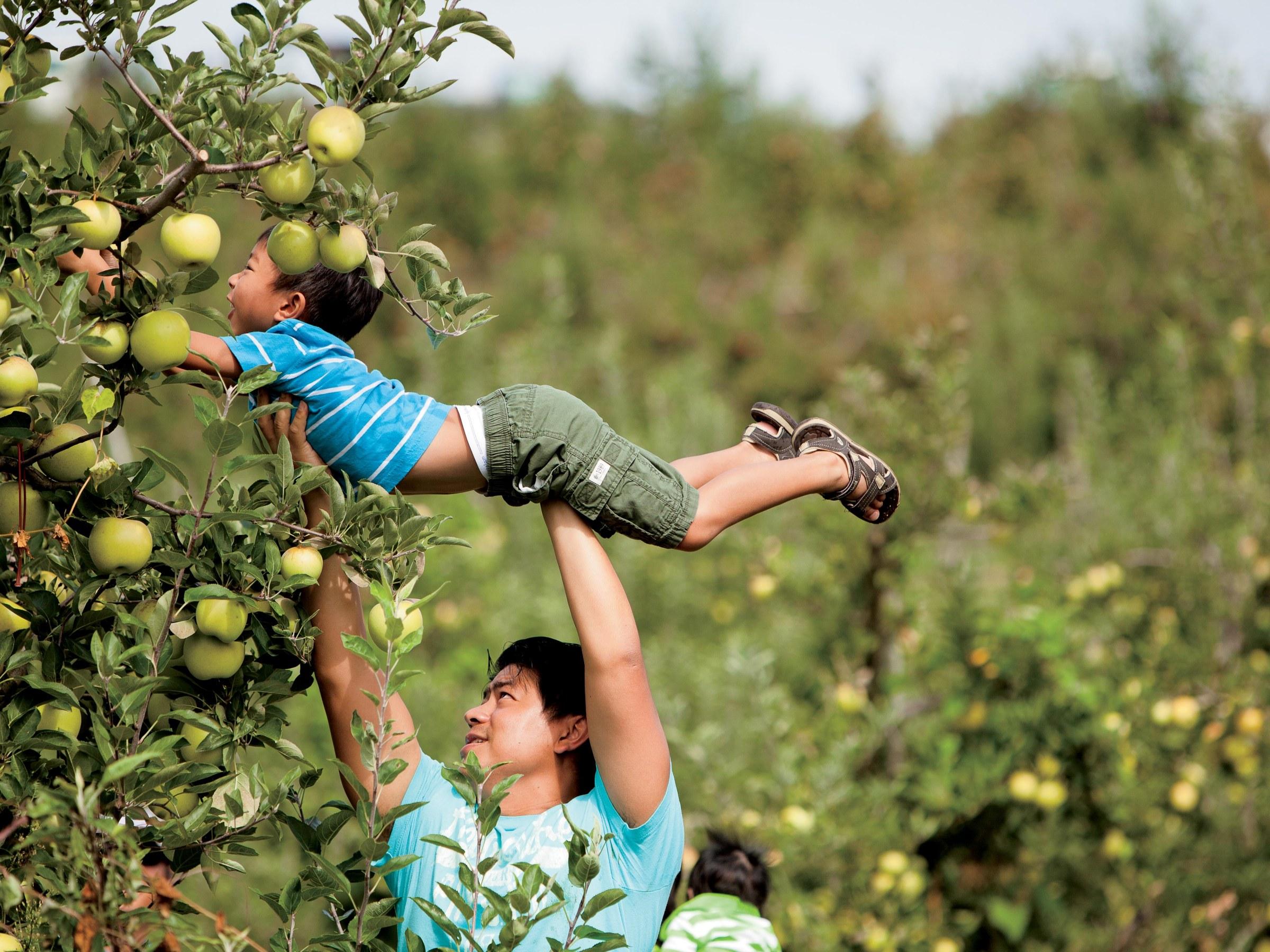 Apple Picking, Agritourism Insurance