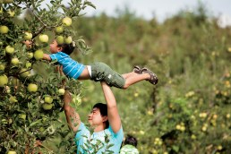 Apple Picking, Agritourism Insurance