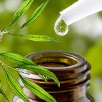 Tea Tree Oil has an antibacterial and antimicrobial property with a scent that no bug likes!