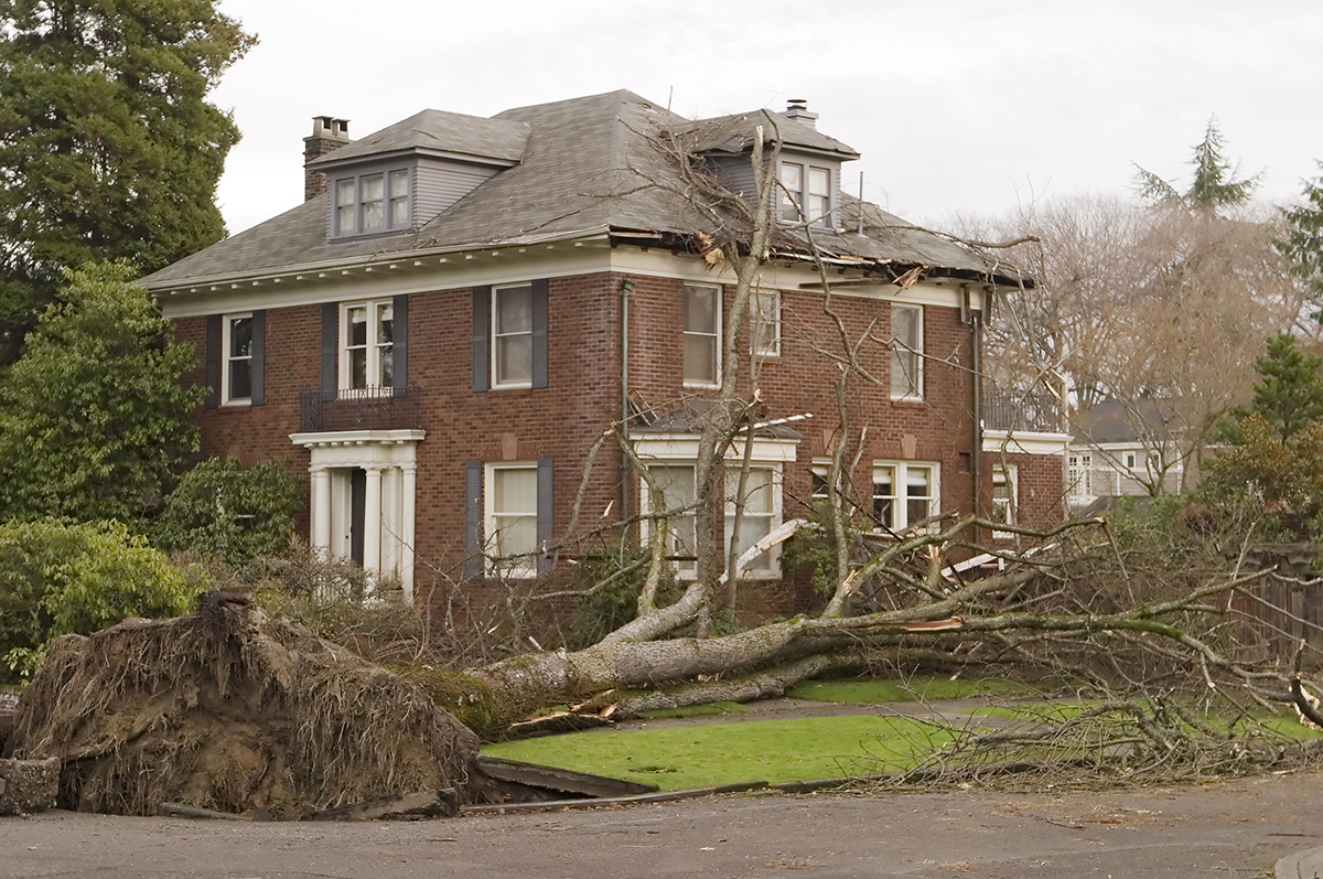 Home with wind damage and uprooted tree