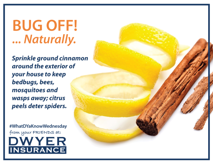 Sprinkle ground cinnamon around your house to keep bedbugs, bees, mosquitoes and wasps away; citrus peels will deter spiders.