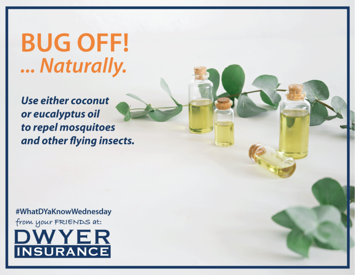 Use either coconut or eucalyptus oil to repel mosquitoes and other flying insects.