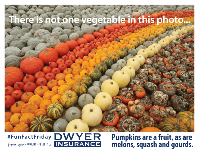 There is not one vegetable in this photo… Pumpkins are a fruit, as are melons, squash and gourds.