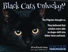 Black Cats Unlucky?