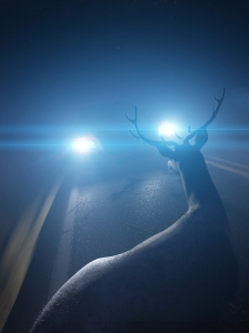 A deer in car headlights on highway