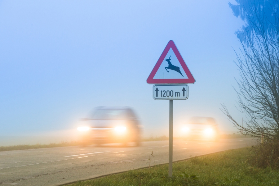 Cars passing a traffic sign for deer crossing in fog