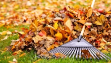 Rake with autumn leaves