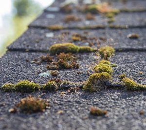 Spring Home Inspection, check roof for mold